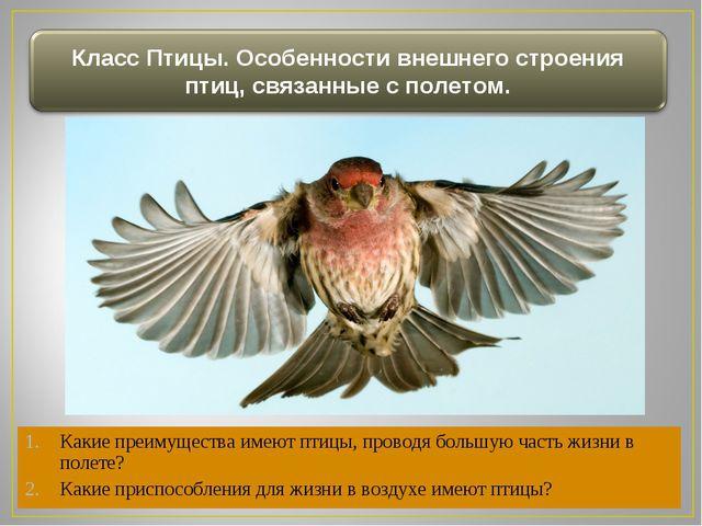 Какие преимущества имеют птицы, проводя большую часть жизни в полете? Какие п...