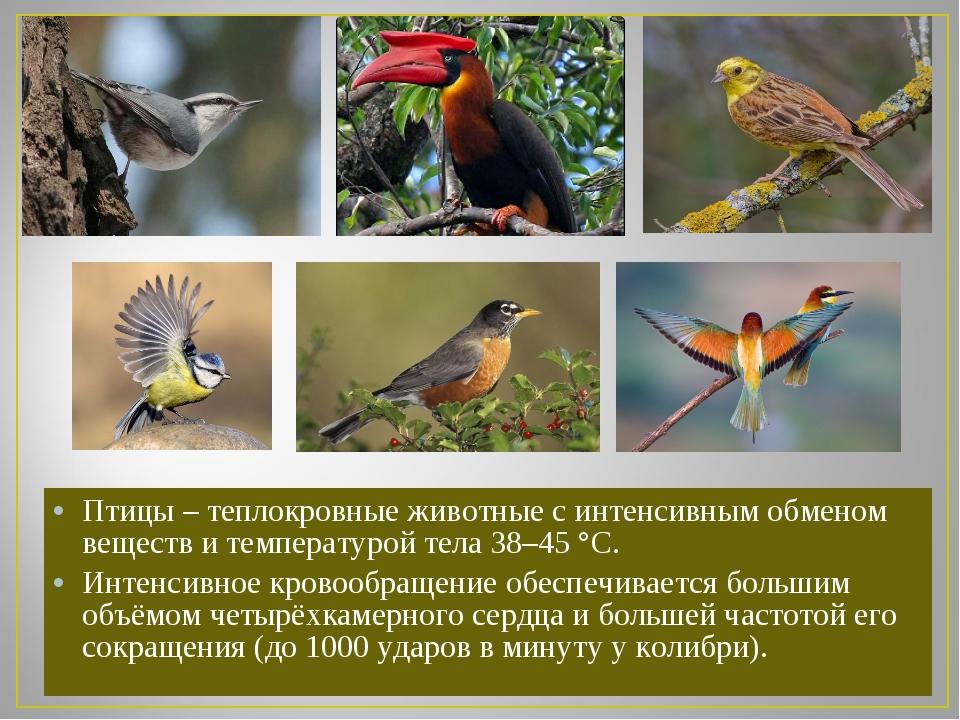 Птицы – теплокровные животные с интенсивным обменом веществ и температурой те...
