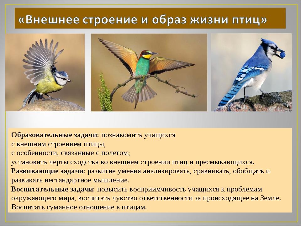 Образовательные задачи: познакомить учащихся с внешним строением птицы, с осо...