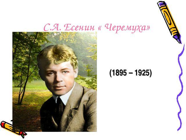 С.А. Есенин « Черемуха» (1895 – 1925)