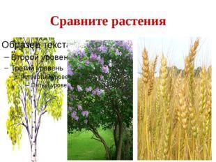 Сравните растения