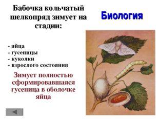 Бабочка кольчатый шелкопряд зимует на стадии: Биология - яйца - гусеницы - ку