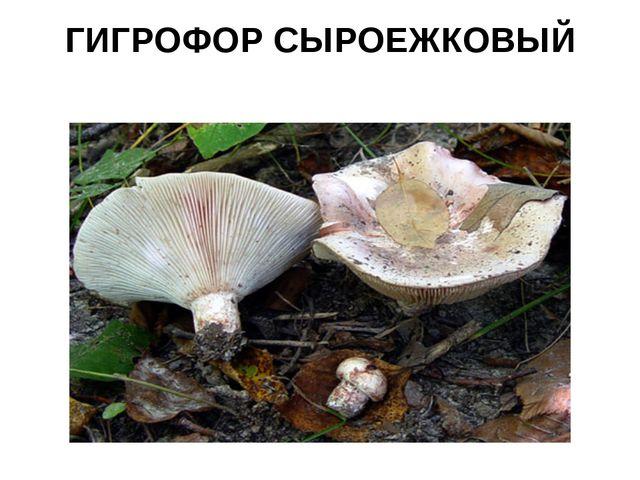 ГИГРОФОР СЫРОЕЖКОВЫЙ