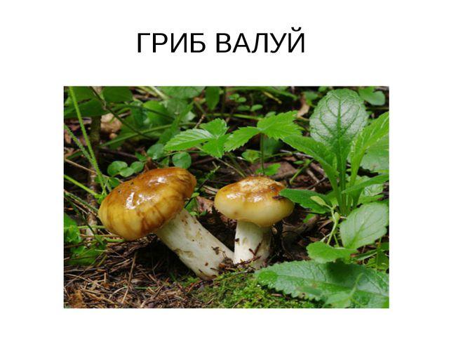 ГРИБ ВАЛУЙ