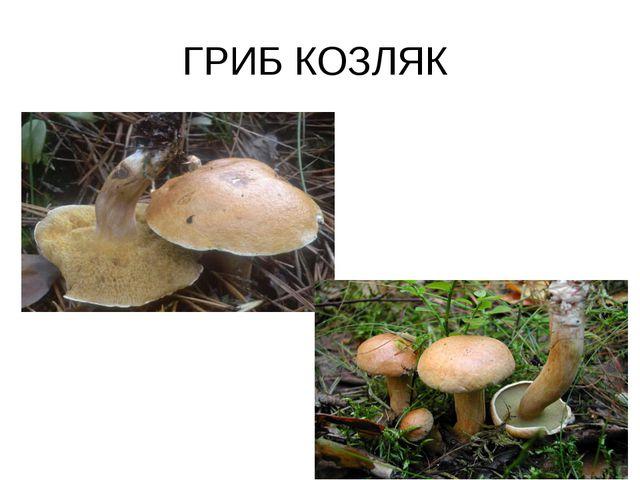 ГРИБ КОЗЛЯК