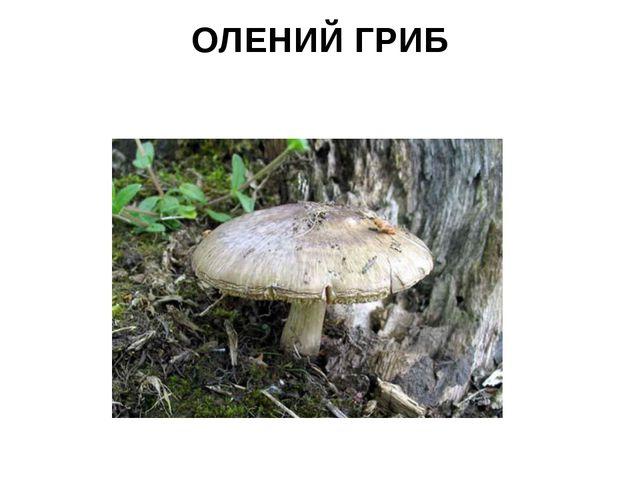 ОЛЕНИЙ ГРИБ