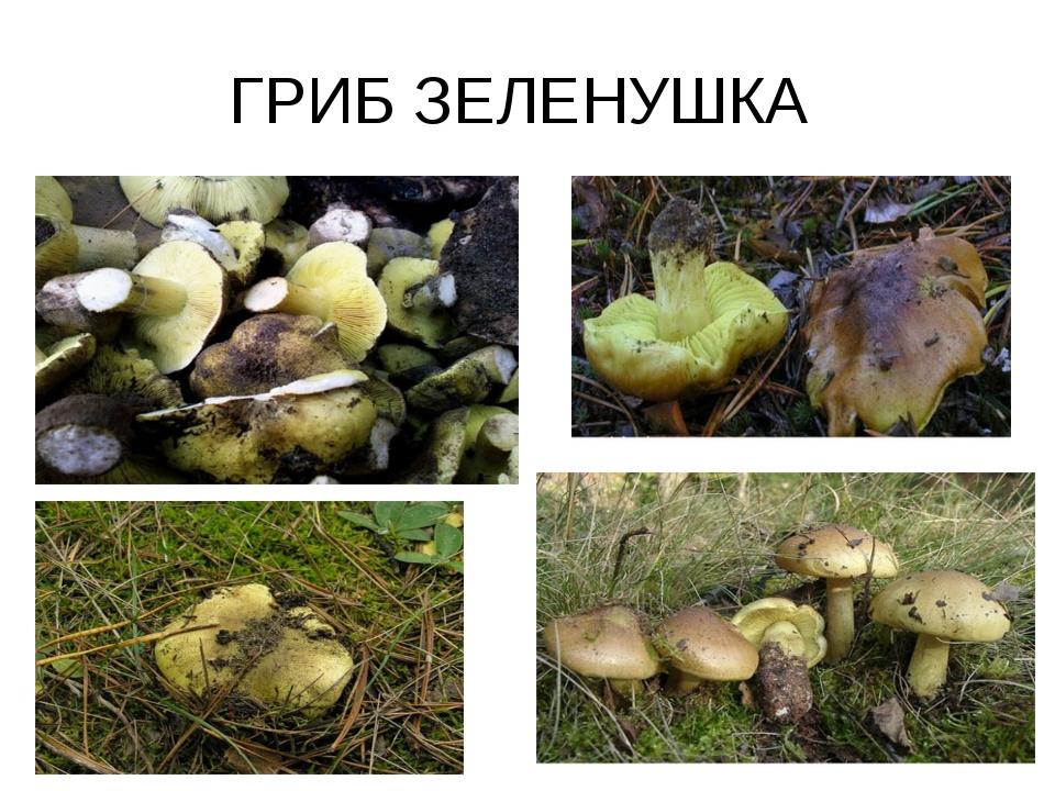 ГРИБ ЗЕЛЕНУШКА