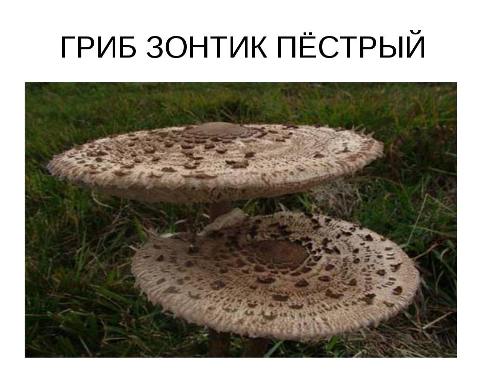 ГРИБ ЗОНТИК ПЁСТРЫЙ