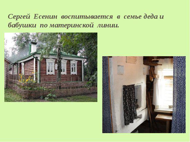 Сергей Есенин воспитывается в семье деда и бабушки по материнской линии.