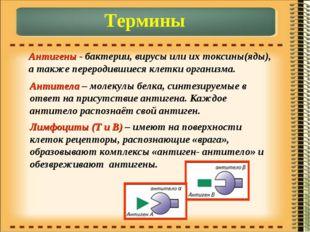 Термины Антигены - бактерии, вирусы или их токсины(яды), а также переродившие