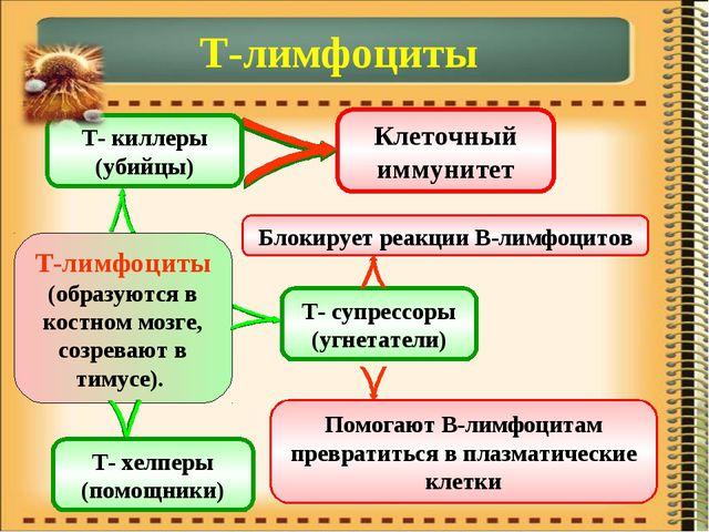Т-лимфоциты Т-лимфоциты (образуются в костном мозге, созревают в тимусе). Т-...