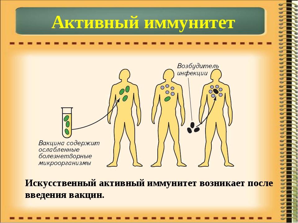 Активный иммунитет Искусственный активный иммунитет возникает после введения...