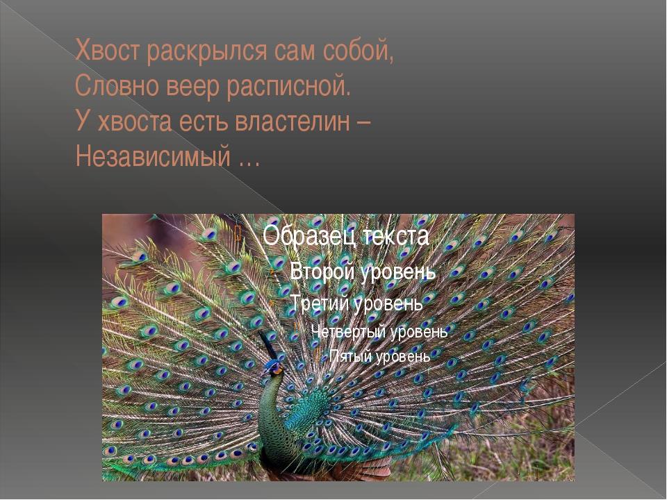 Хвост раскрылся сам собой, Словно веер расписной. У хвоста есть властелин – Н...