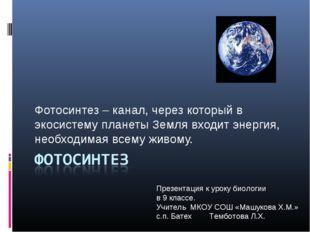 Фотосинтез – канал, через который в экосистему планеты Земля входит энергия,