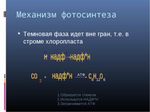 Механизм фотосинтеза Темновая фаза идет вне гран, т.е. в строме хлоропласта 0