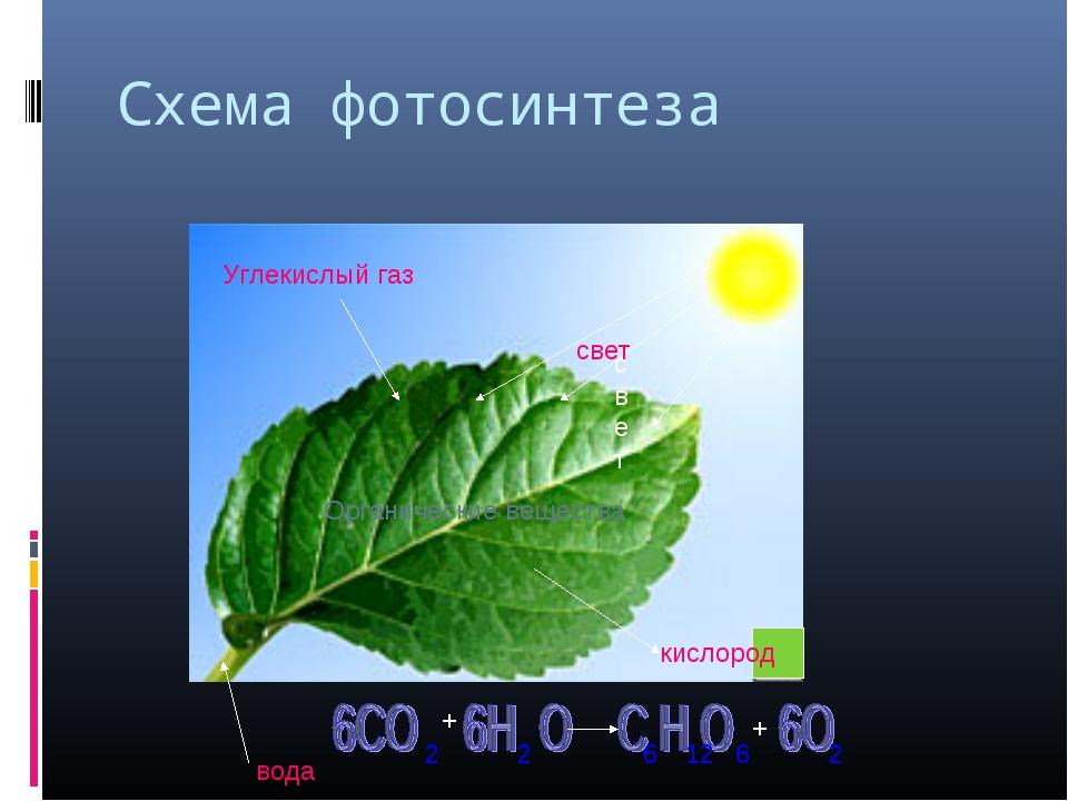 Схема фотосинтеза Углекислый газ вода кислород свет свет Органические веществ...