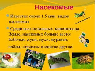 Насекомые Известно около 1,5млн. видов насекомых Среди всех остальных живот