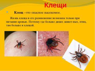 Клещи Клещ –это опасное насекомое. Жизнь клеща и его размножение возможна то
