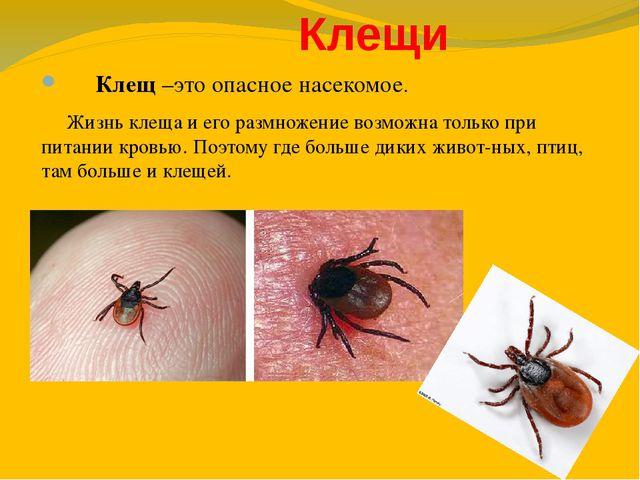 Клещи Клещ –это опасное насекомое. Жизнь клеща и его размножение возможна то...