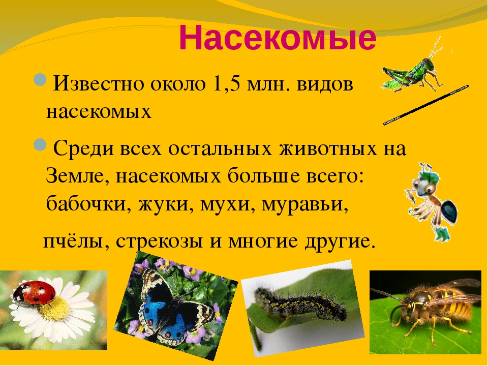 Насекомые Известно около 1,5млн. видов насекомых Среди всех остальных живот...