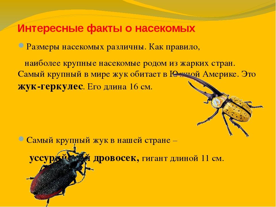 Афоризм о насекомых