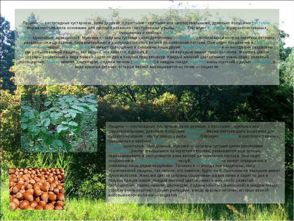 Лещины — листопадные кустарники, реже деревья, с простыми - круглыми или широ...