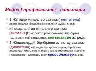 Мейоз-I профазасының сатылары 1.Жіңішке жіпшелер сатысы( лептотена) Хромосома