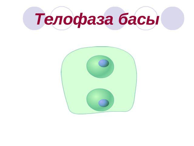 Телофаза басы