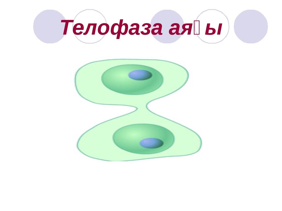 Телофаза аяғы