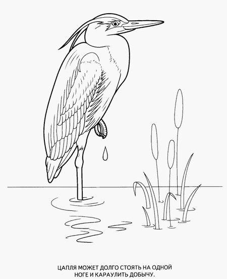 Раскраска Цапля Раскраски птиц. . Картинки птиц, рисунки птиц Дитячі розфарбовки размалевки розмальовки для дітей