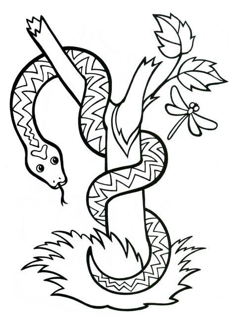 Скачать Змея картинка раскраска для детей 2