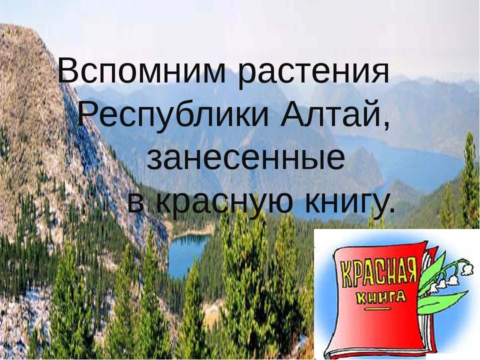 Вспомним растения Республики Алтай, занесенные в красную книгу.