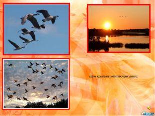 Шум крыльев улетающих птиц
