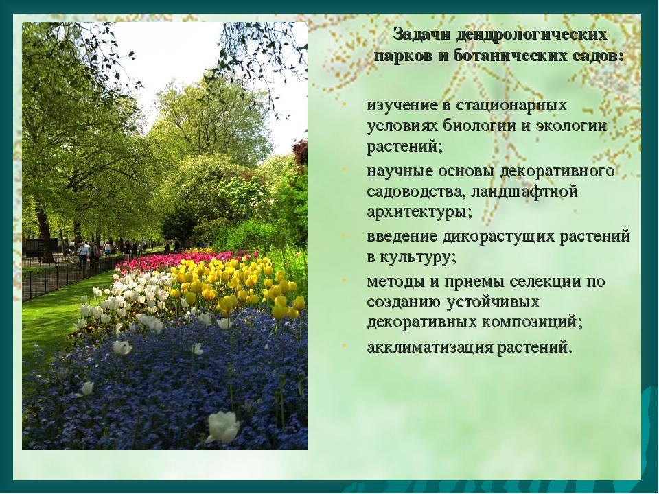Задачи дендрологических парков и ботанических садов: изучение в стационарных...
