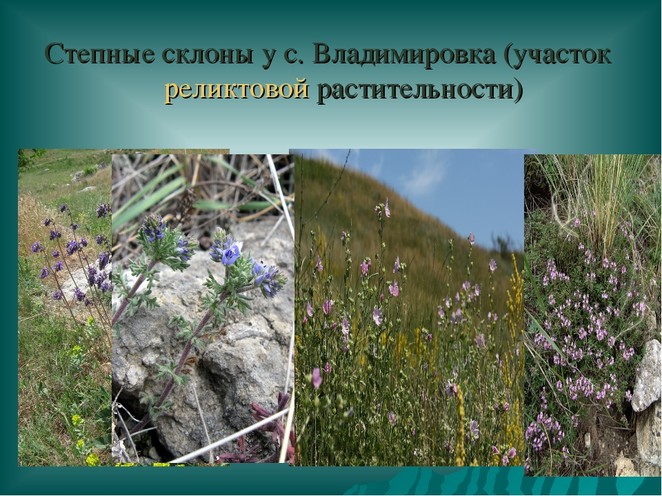 Степные склоны у с. Владимировка (участок реликтовой растительности)