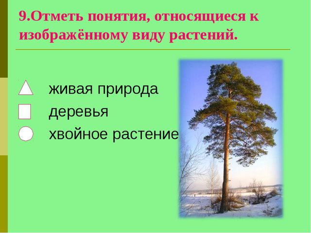 9.Отметь понятия, относящиеся к изображённому виду растений. живая природа де...