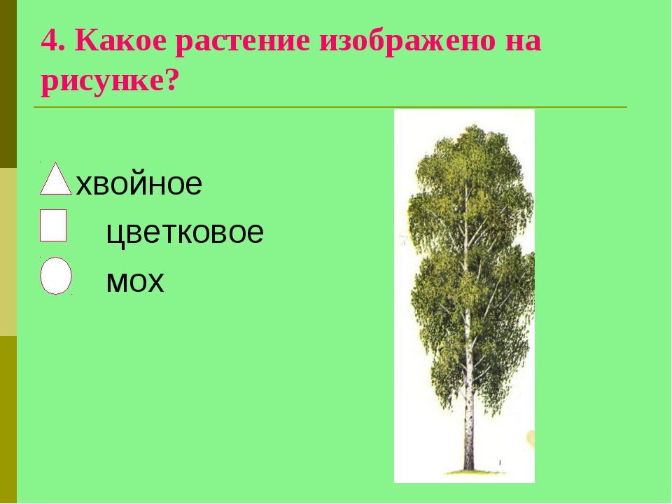 4. Какое растение изображено на рисунке? хвойное цветковое мох