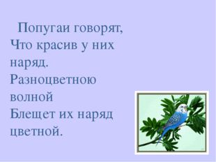 Попугаи говорят, Что красив у них наряд. Разноцветною волной Блещет их наряд