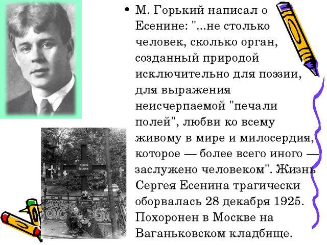 """М. Горький написал о Есенине: """"...не столько человек, сколько орган, созданны..."""