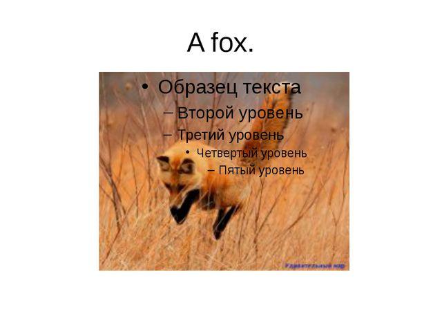 A fox.