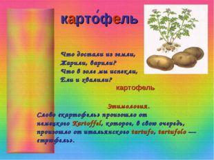 картофель Что достали из земли, Жарили, варили? Что в золе мы испекли, Ели и