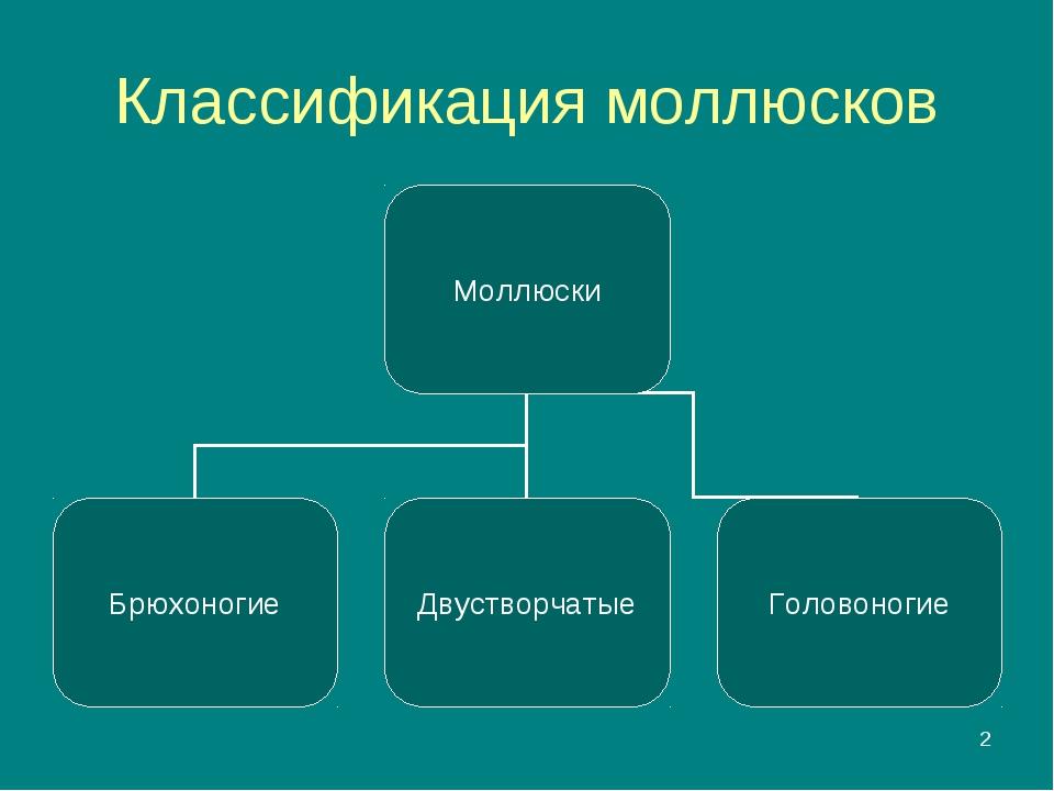 * Классификация моллюсков