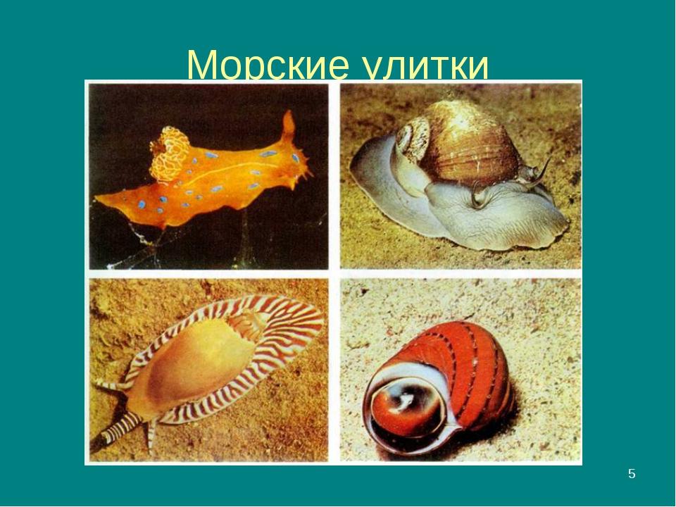 * Морские улитки