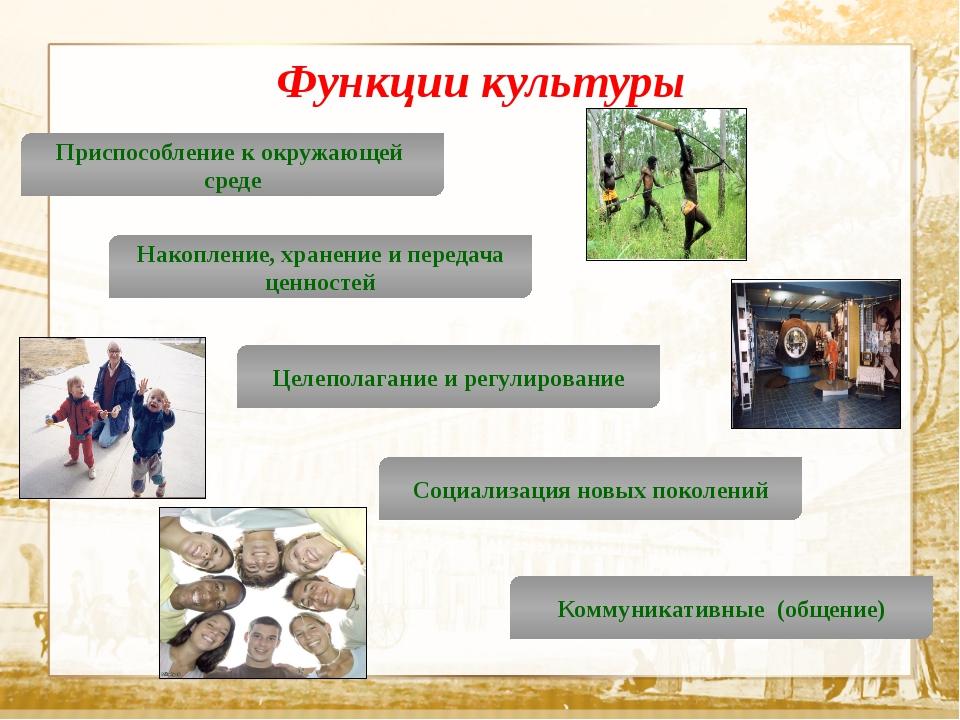 Текст Функции культуры Приспособление к окружающей среде Накопление, хранени...