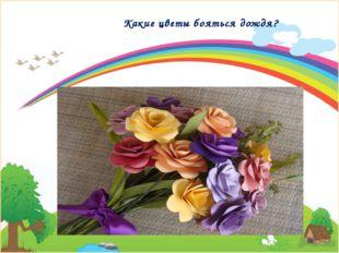 Какие цветы бояться дождя?