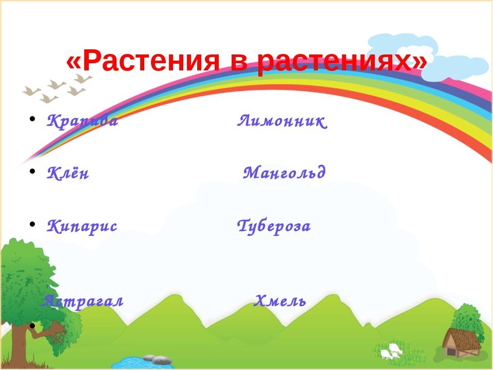«Растения в растениях» Крапива Лимонник  Клён Мангольд  Кипарис Тубероза ...