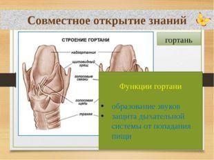 Совместное открытие знаний гортань Функции гортани образование звуков защита