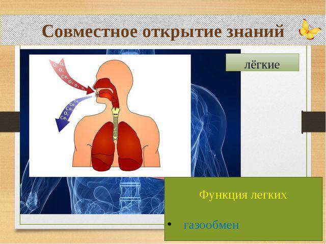Совместное открытие знаний лёгкие Функция легких газообмен