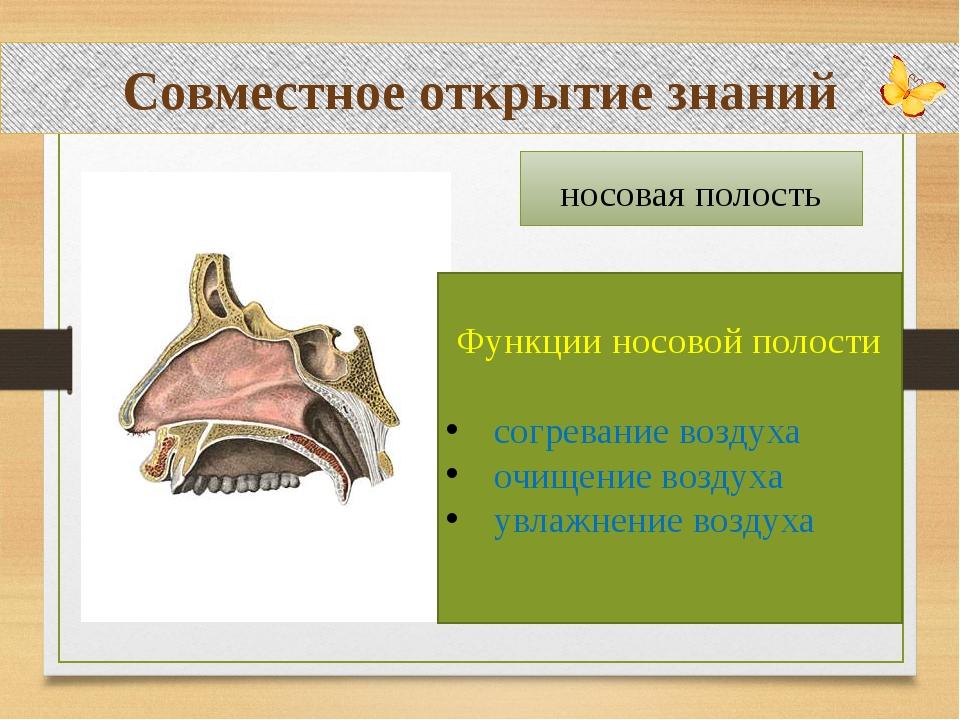 Совместное открытие знаний носовая полость Функции носовой полости согревани...