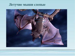 Летучие мыши слепые